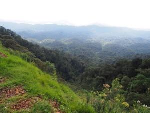 P2142546 - Uitzicht Nyungwe Forest NP