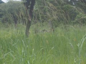 P2243090 - Zebra's Katavi NP