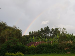 P2283428 - Regenboog Bongo Camp