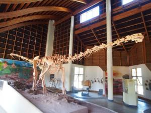 P3023515 - Reconstructie skelet Malawisaurus Karonga Museum