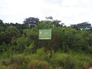 P3073993 - Ene kant van de weg Malawi, deze kant is Zambia, Nyika NP