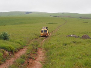 P3084161 - kanarie in het groen, Nyika NP