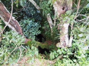 P3174891 - Chingwe Hole (je moet wat fantasie gebruiken) Zomba plateau