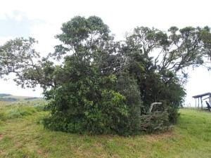 P3174896 - Chingwe Hole (echt waar) Zomba plateau