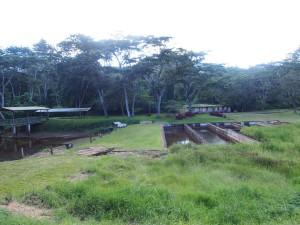P3174914 - Forel kwekerij (waar vooral kleding in wordt gewassen) Zomba plateau