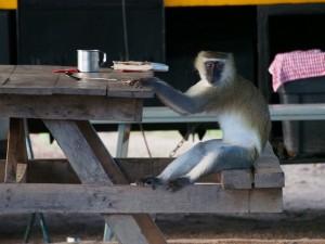 P3255304 - Waar blijft mijn eten, Wildlife Camp