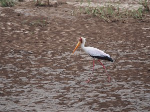 P3275360 - Afrikaanse nimmerzat Wildlife Camp