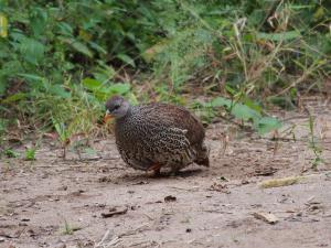 P4216855 - Onbekende vogel op camping Livingstone