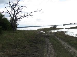 IMG 4304 - Overstroomde wegen Chobe NP