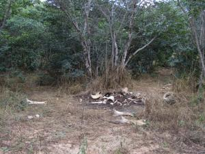 IMG 4322 - Restjes van een olifant Chobe NP