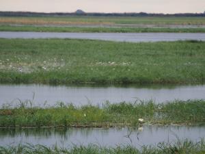 P4246915 - Waterbloemen Chobe rvier