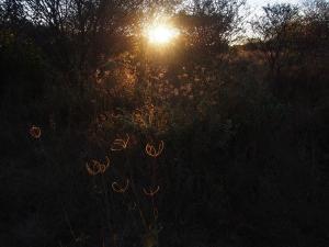 P5047822 - Zonsopkomst wildkampje onderweg naar Aha Hills