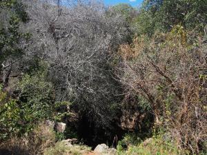P5047872 - Zuidelijke ingang Gcwihaba Cave