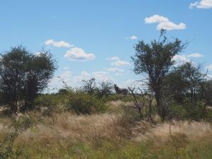P5057944 - Zebra's onderweg naar Tsua