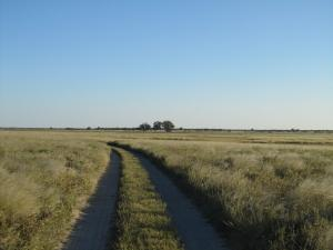 IMG 4412 - Op weg naar Bains Baobabs Nxai Pan NP