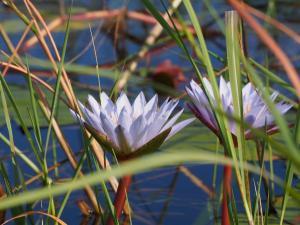 P5098084 - Mokorotochtje door Okavango delta