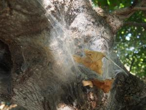 P5098147 - Spinnenweb
