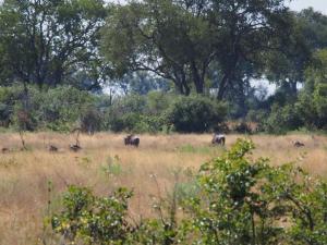 P5098175 - Wildebeesten tijdens natuurwandeling op eiland