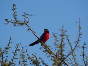 P5158926 - Onbekende vogel CKGR