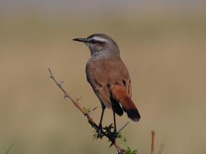 P5189283 - Onbekende vogel Kubu Island