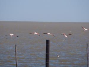 P5199351 - Flamingos bij Kukonje Island
