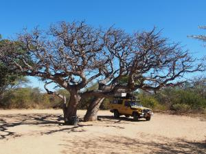 P5230108 - Kampje Khama Rhino Sanctuary