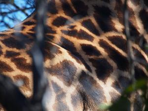 P5230112 - Safarikleuren Khama Rhino Sanctuary