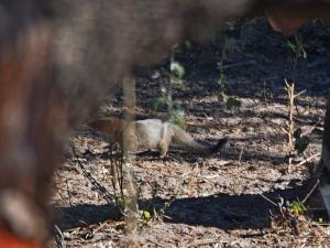 P5240296 - Mangoest Khama Rhino Sanctuary
