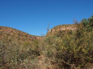 P5250381 - Moremi Gorge