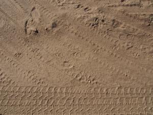 P6040650 - Sporen van wilde luipaard bij Dusternbrook Ranch