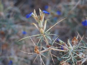 P6061006 - Bloemen met naalden met zijnaalden