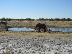 IMG 0237 - Drinkende olifant Etosha NP