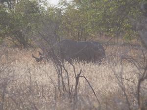 P6131607 - Zwarte neushoorn toen ik hem net zag, Etosha NP