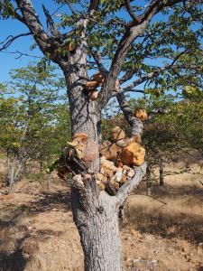 P6181980 - Himbagraf Kaokoveld