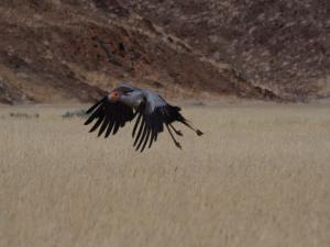 P6242288 - Secretarisvogel