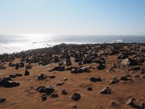 P6252471 - Kaapse pelsrobben Cape Cross