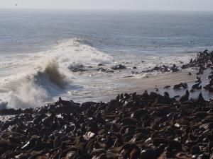 P6252519 - Kaapse pelsrobben Cape Cross