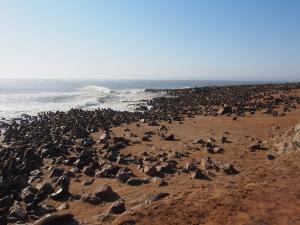 P6252535 - Kaapse pelsrobben Cape Cross