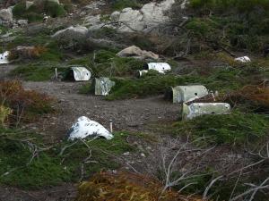 IMG 1717 - Pinguinkolonie Bettys Bay