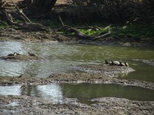 IMG 2360 - Schildpadden Kruger NP