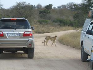 IMG 2416 - Cheeta Kruger NP