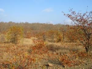 IMG 2491 - Herfstkleuren Kruger NP