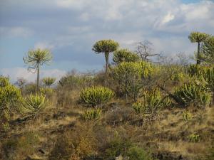 IMG 2540 - Kruger NP