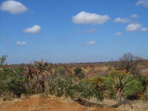IMG 2552 - Kruger NP