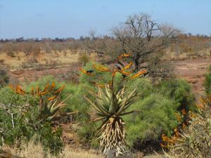 IMG 2554 - Kruger NP