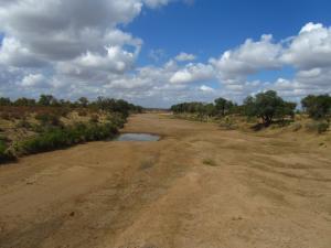 IMG 2561 - Droge rivier Kruger NP