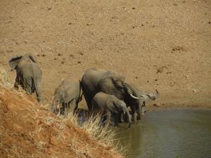 IMG 2563 - Olifanten Kruger NP
