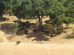 IMG 2564 - Buffels Kruger NP