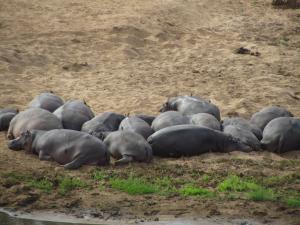 IMG 2607 - Nijlpaardensiesta Kruger NP