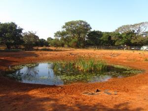 IMG 3187 - Waterplaats Bushbaby lodge
